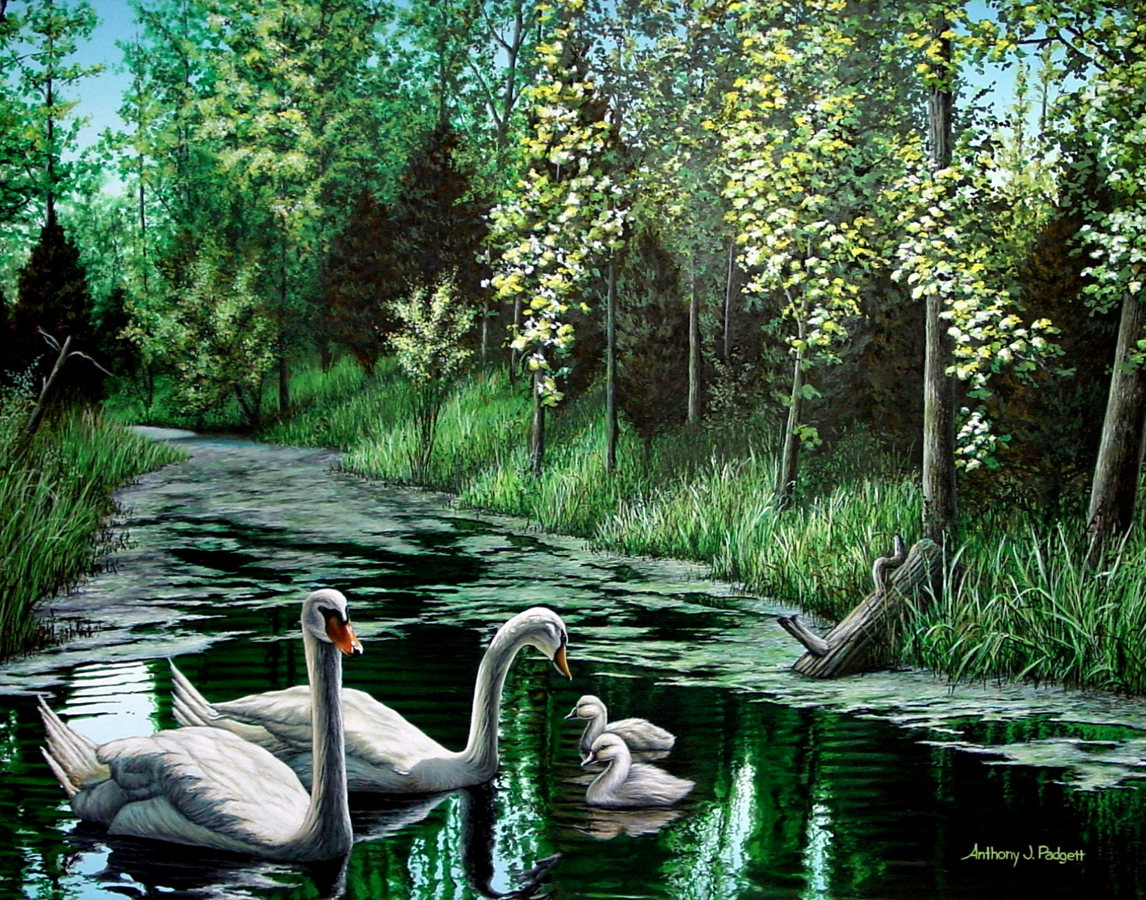 A Day Out - Swans