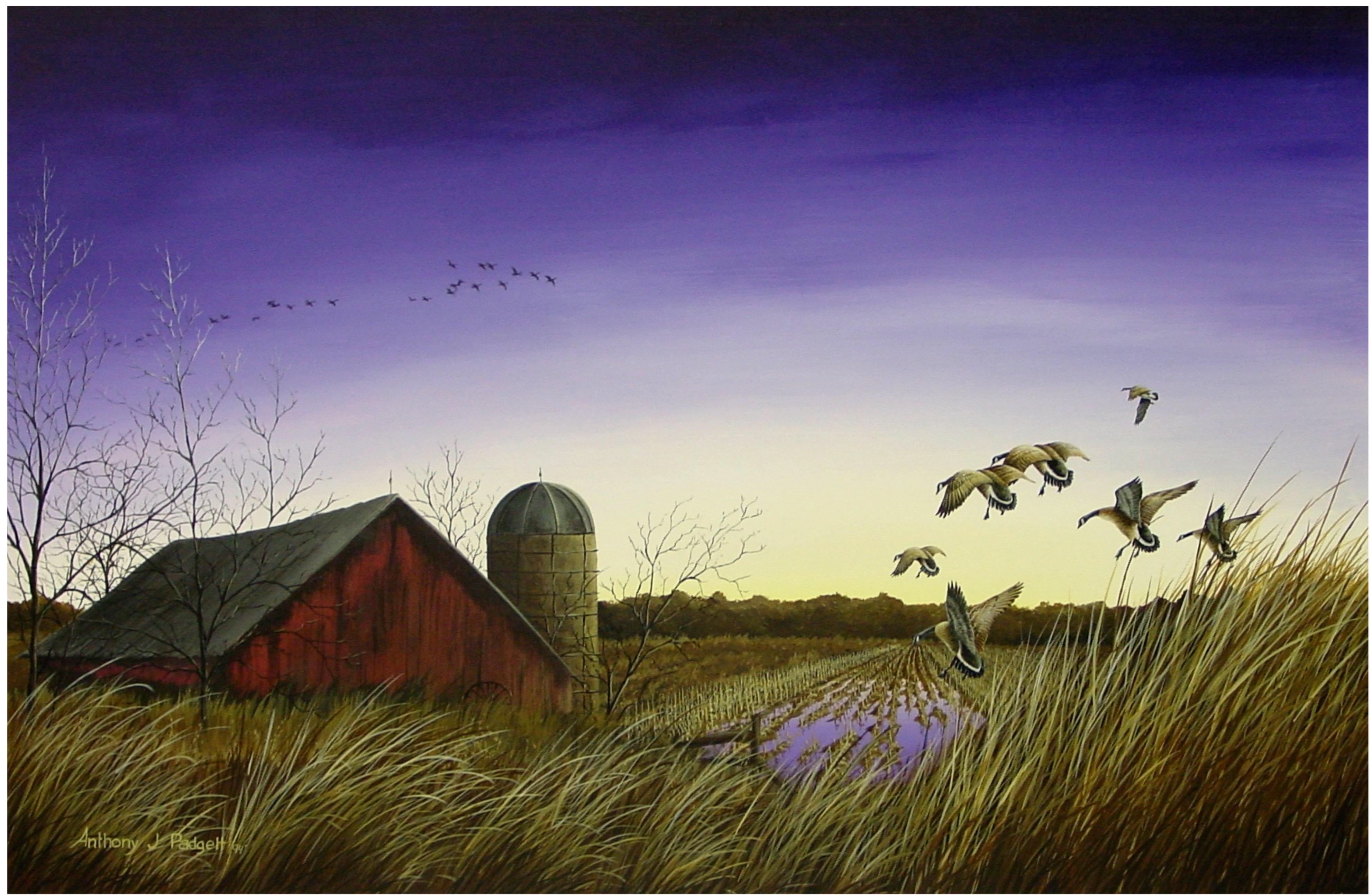Autumn Sunset - Geese