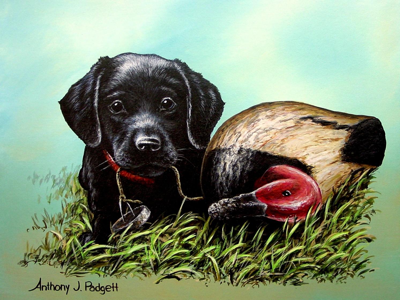 Black Lab Pup with Decoy
