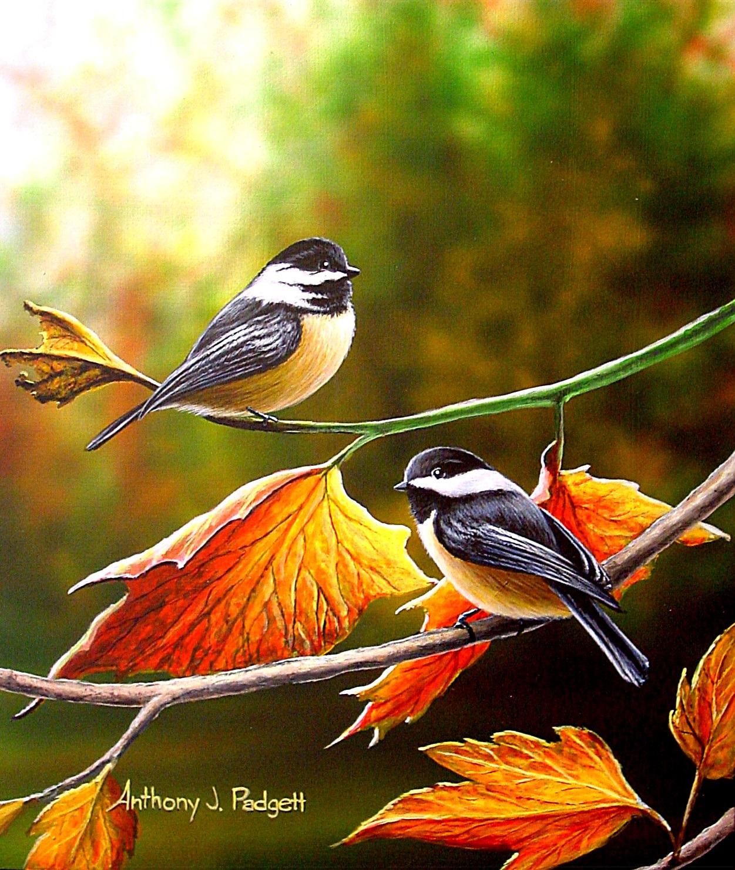 Fall Chickadees