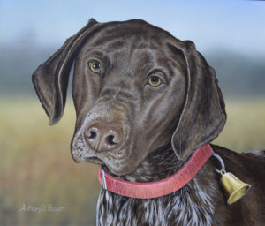 German Shorthair Portrait