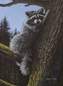 Raccoon Rest Stop for web