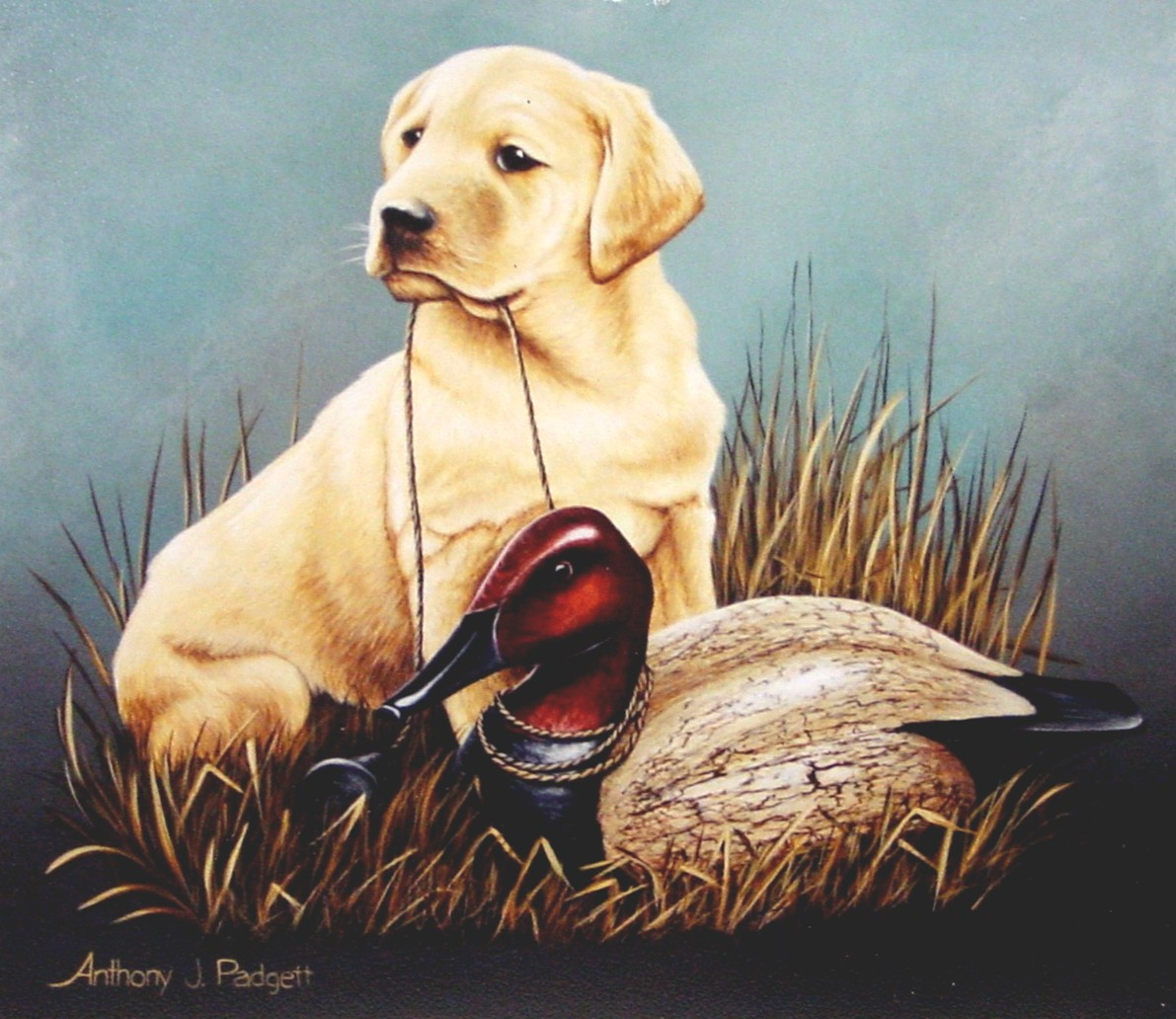 Yellow Lab Pup with Decoy IV